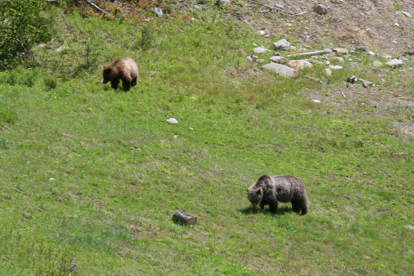 Two cubs - June 28